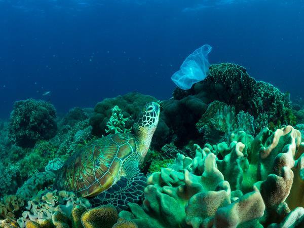 Oceana dénonce la pollution du plastique